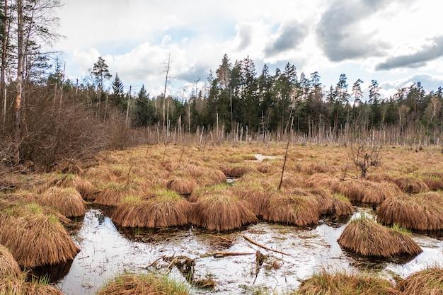 Bagno w lesie. las jest zalany wodą.
