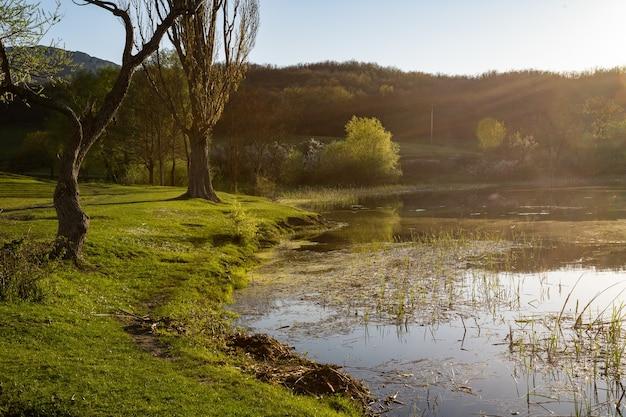 Bagno w letni słoneczny dzień bagno wśród drzew i zielonej trawy