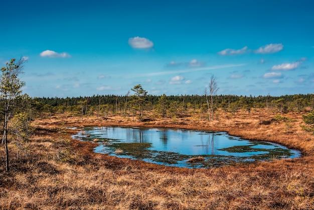 Bagno w parku narodowym kemeri, łotwa, europa