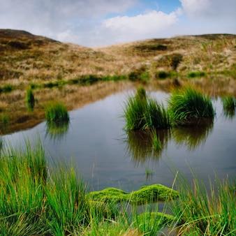 Bagno z zielonymi roślinami na szczycie góry. panorama z dwóch ujęć.