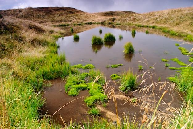 Bagno z zielonymi roślinami na szczycie góry