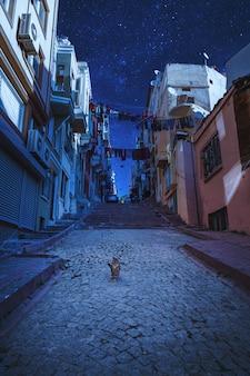 Bajkowa noc gród. krajobrazowy turcja. stary widok ulicy z bezpańskim kotem