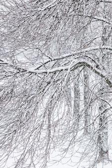 Bajkowe puszyste ośnieżone gałęzie drzew sceneria przyrody z białym śniegiem i zimnymi opadami śniegu