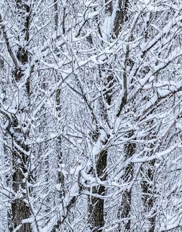 Bajkowe puszyste, pokryte śniegiem gałęzie drzew, krajobrazy przyrody z białym śniegiem i zimnymi opadami...