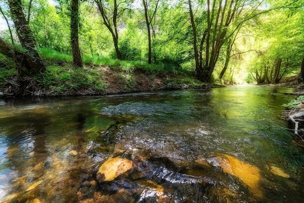 Bajkowy krajobraz w odcieniach zieleni i złota ze strumieniem między drzewami i refleksami lasu w wodzie. duraton, segovia, hiszpania,