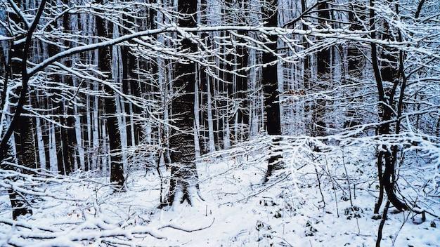Bajkowy las w śniegu