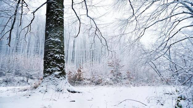 Bajkowy zimowy las w śniegu