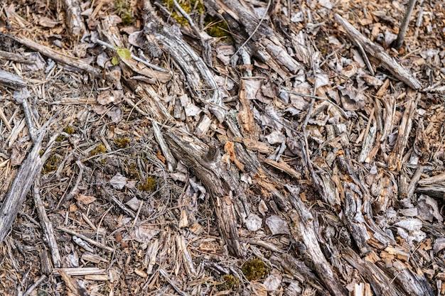 Bałagan suchych drewnianych drzazg na ziemi na zewnątrz