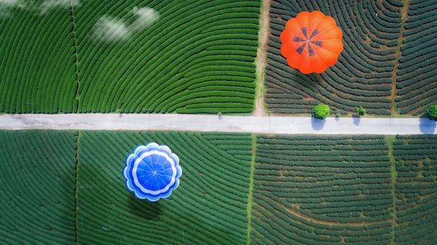 Balon na ogrzane powietrze przelatuje nad farmą zielonej herbaty