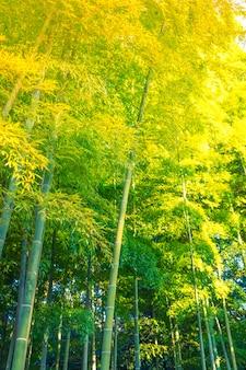 Bamboo forest (filtrowany obraz przetwarzany rocznika efekt.)