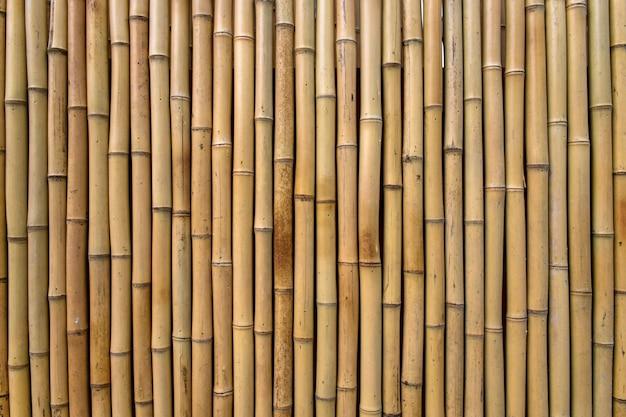 Bamboo tekstury