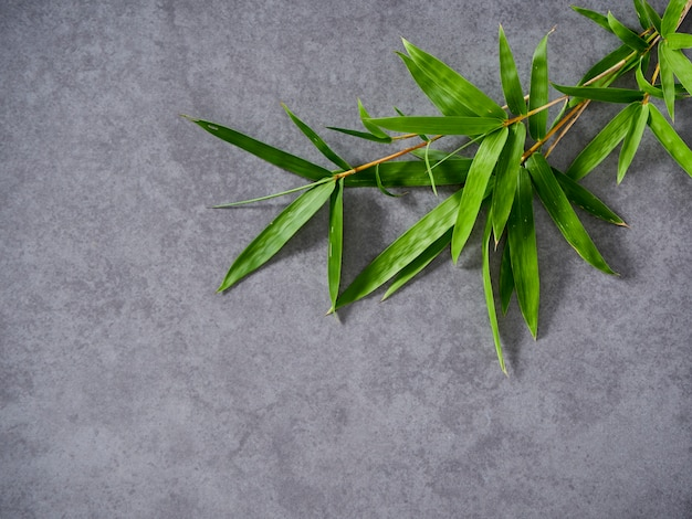 Bambus liście na szarym tle.