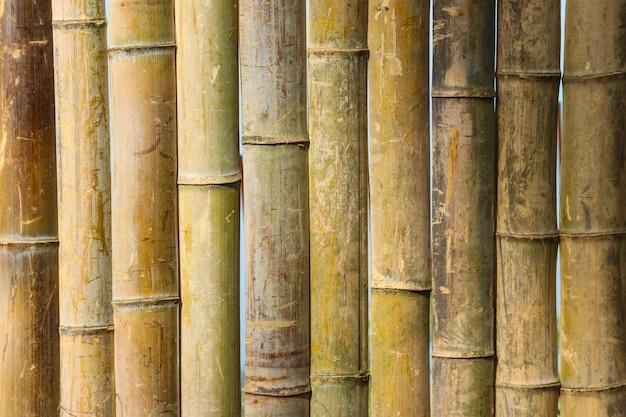 Bambus tekstura tło. zbliżenie bambusowego ogrodzenia lub ściany
