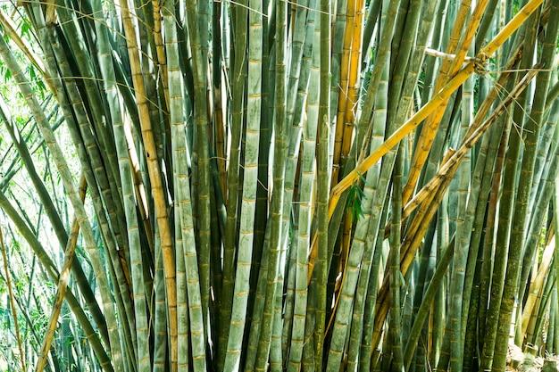 Bambusowa trawa na sri lance widok zbliżenie. krajobraz cejlonu