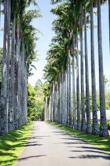 Bambusowa trawa na sri lance widok zbliżenie