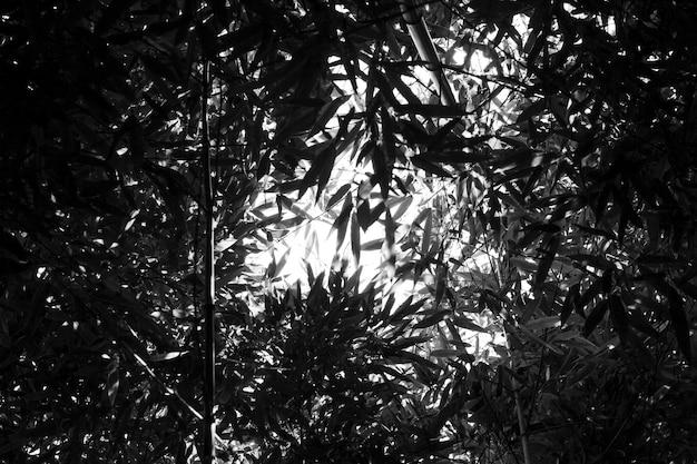 Bambusowe drzewa w ogrodzie botanicznym. czarno-biała ramka z abstrakcyjnymi liśćmi