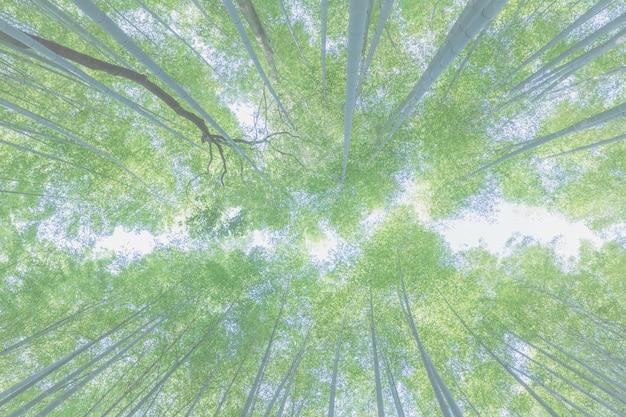 Bambusowe tło widoku