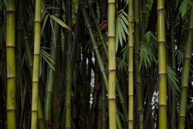 Bambusowe tło
