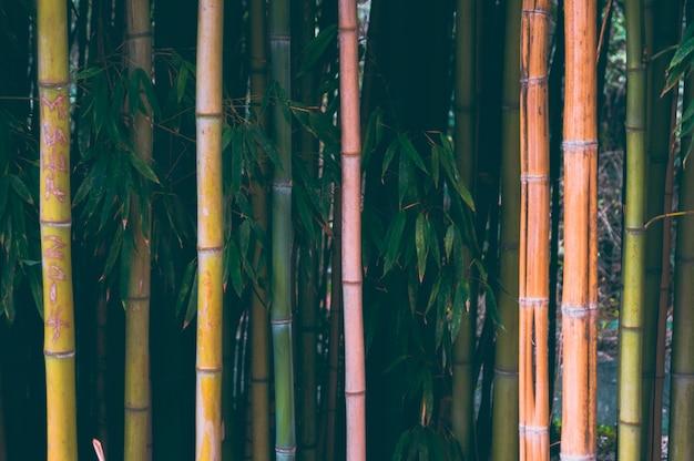 Bambusowe zarośla w parku