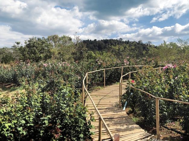 Bambusowy drewno mosta przejście na róża kwiacie