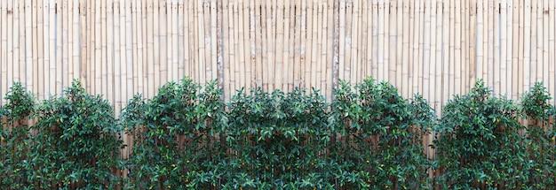 Bambusowy drewno ogrodzenia tekstury wzoru tło z zielonymi liśćmi obramiają