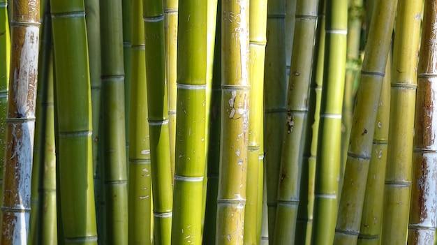 Bambusowy gaj, bambusowy lasowy naturalny zielony tło