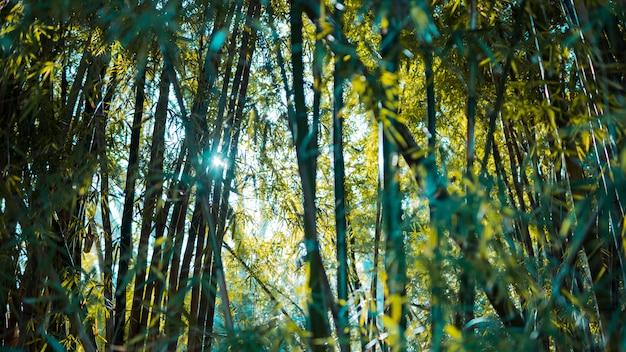 Bambusowy krajobraz lasu