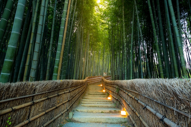 Bambusowy las arashiyama