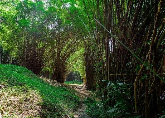 Bambusowy las i piękny wodospad w naturalnym