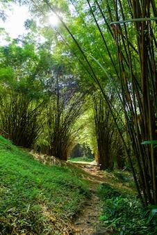 Bambusowy las i piękny wodospad