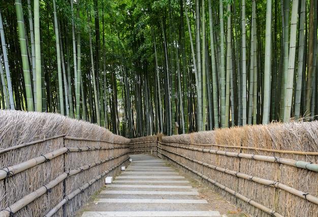 Bambusowy las w arashiyama, kyoto, japonia