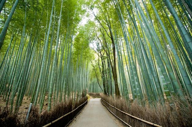 Bambusowy las w arashiyama mieście kyoto