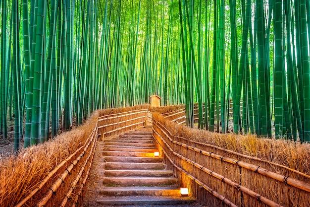 Bambusowy las w kioto w japonii.