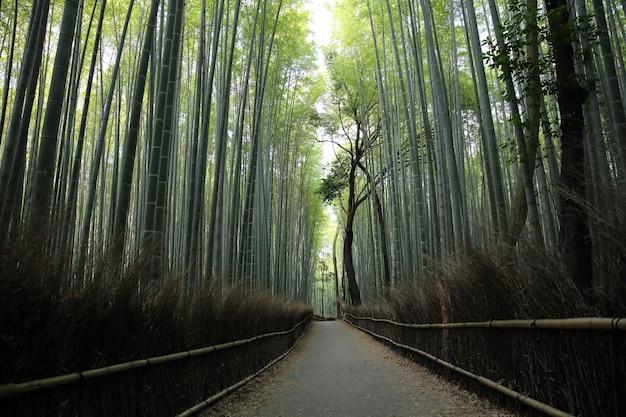 Bambusowy las z chodnikiem w kioto w japonii