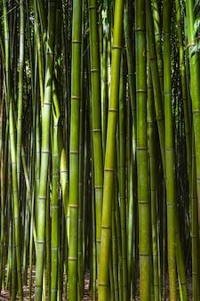 Bambusowy las.