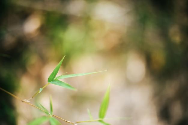 Bambusowy liść gałąź tło