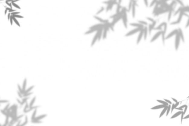 Bambusowy liścia cień na biel ściany tle.