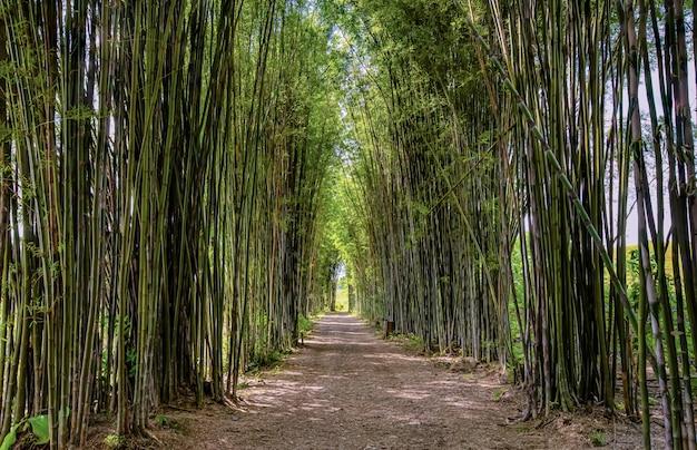 Bambusowy łuk, droga, światło popołudniowe