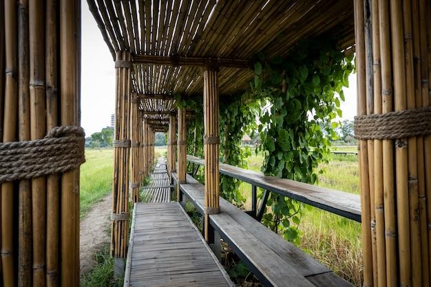 Bambusowy tunel i most prowadzi na pole ryżowe.
