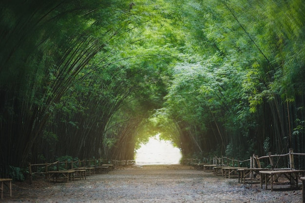 Bambusowy tunel w nakhon nayok, tajlandia