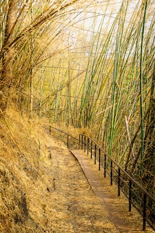 Bambusowy tunelowy ścieżki natury śladu tło