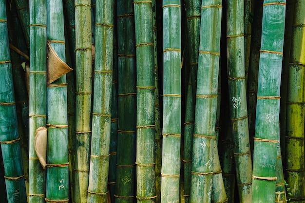 Bambusowy wzór lasu zielony stary