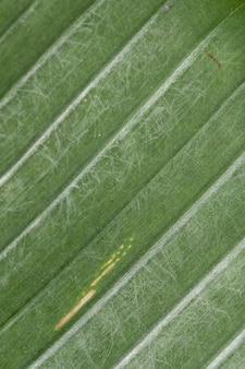 Bananowa liść zieleni tekstura