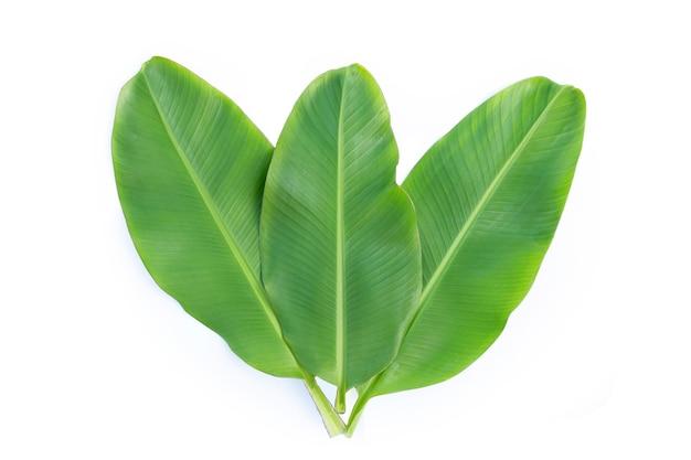 Bananowe liście na białej powierzchni