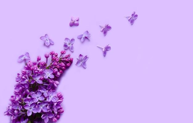 Baner z kwitnącą gałęzią bzu na tym samym kolorowym tle. minimalistyczna kompozycja kwiatowa w modnym stylu z pustym miejscem na tekst.
