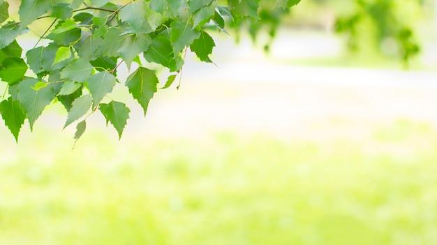 Baner z ramą świeżych zielonych liści drzew
