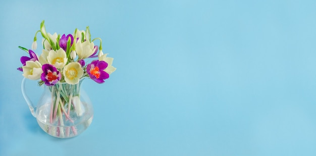 Baner z życzeniami na wiosenne wakacje, piękne kwiaty pierwiosnków na niebieskim tle z miejsca na kopię