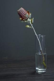 Banksia kwiat na wazonie