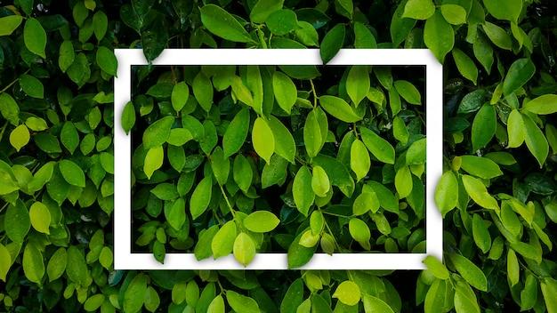 Banyan zieleń opuszcza natury tło z ramą