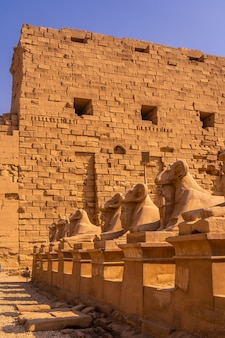 Barany przy wejściu do świątyni karnaku, wielkiego sanktuarium amona. egipt